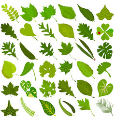 Leaves autumn vector