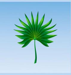 tropical palm leaf on blue background vector image