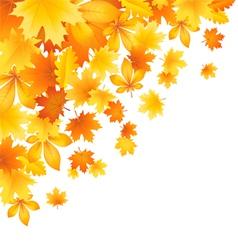 Beautifu l autumn leaves vector image vector image