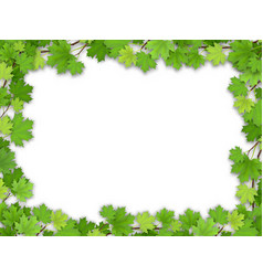 frame from the green maple leaves vector image vector image