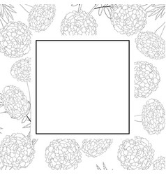 marigold on white banner card outline vector image