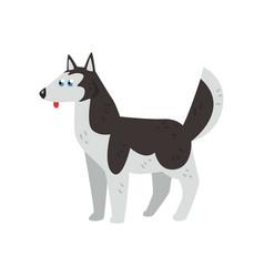 Siberian husky dog character purebred dog vector