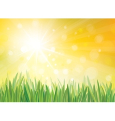 sping sun grass vector image