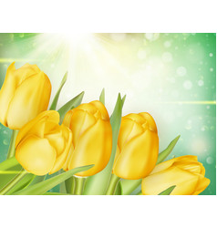 Beautiful tulips background eps 10 vector