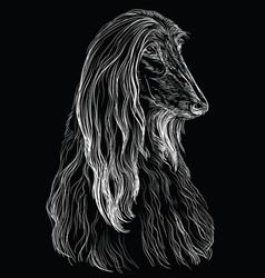 Black afghan hound hand drawing portrait vector