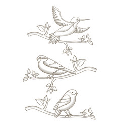 drawing birds in branch tree natural decoration vector image