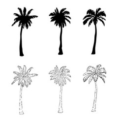 Palm tree silhouette icons on white background vector
