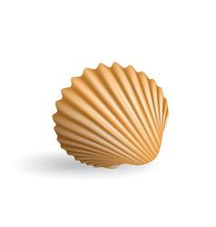 Realistic seashell vector