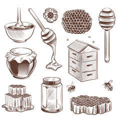 sketch honey engraved natural organic sweet food vector image