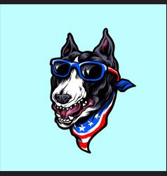 american pitbull terrier dog wearing sunglasses vector image