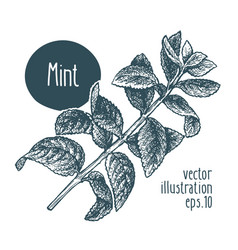 mint branch for design menu vector image