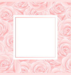 pink rose banner card vector image