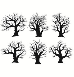 Tree silhouette black bare oak outline detailed vector