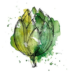 Watercolor of artichoke vector image