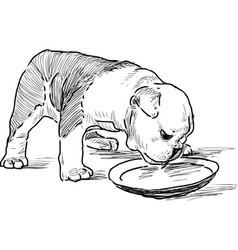 Puppy english bulldog eats vector
