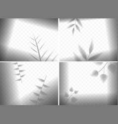 realistic leaves shadows in frames composition vector image
