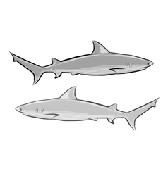 Shark sketch for your design vector image