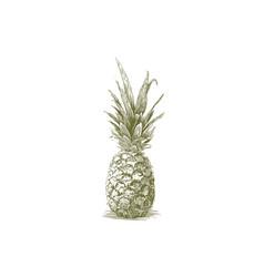 Woodcut pineapple vector