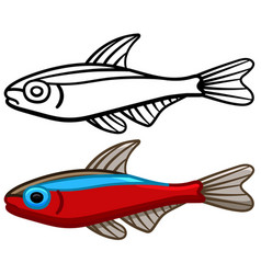 Cardinal tetra fish in colored and line versions vector