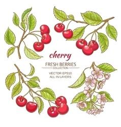 Cherry set vector