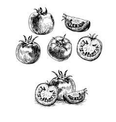 Hand drawn set of tomato sketch vector
