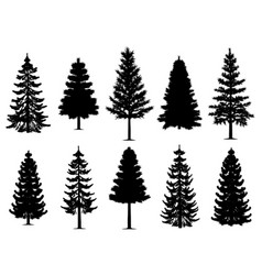 pine fir trees collection vector image