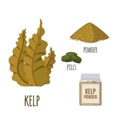 Superfood kelp set in flat style vector