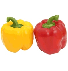 Red and yellow sweet bell pepper isolated on vector