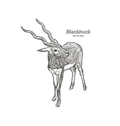 antelope series blackbuck vector image