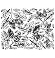 Hand drawn background of amora verde berries vector