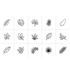 Leaves of plants and trees sketch icon set vector