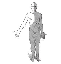 Regions of lymph flow vintage vector