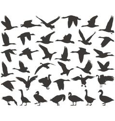 Bird wild geese vector image vector image