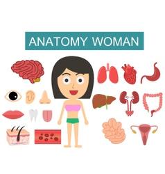 Anatomy body woman vector