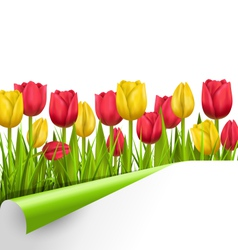 Green grass lawn with tulips and wrapped paper vector image
