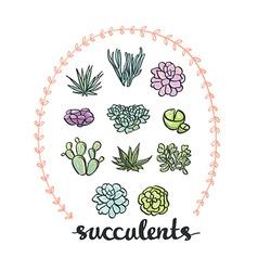 Succulent set cute Plants vector image vector image