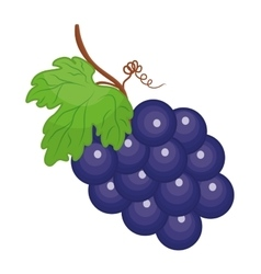 Grapes icon Organic and Healthy food design vector