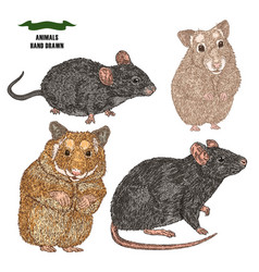 Hand drawn rat mouse and hamsters colored sketch vector