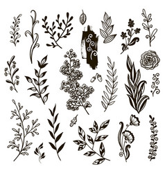 plants set hand drawn vector image