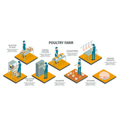 Poultry farm isometric infographics vector
