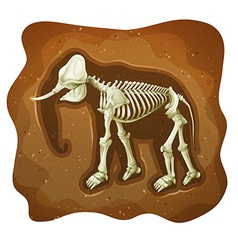 Fossil vector image