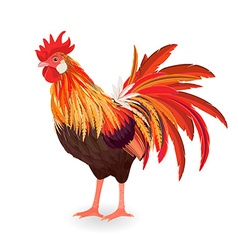 red beautiful rooster for your design vector image vector image