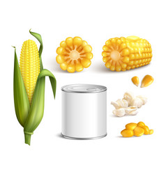 corn realistic set vector image