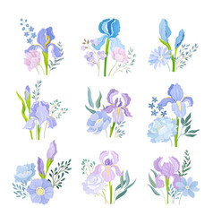 Floral compositions with purple iris flowers on vector