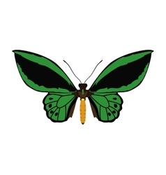 Green Butterfly icon Insect design vector