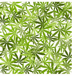 Marijuana leaves seamless pattern on white vector