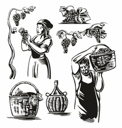 Men and women harvest the grapes in the vineyard vector
