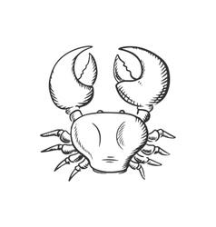 Sketch of big ocean crab vector image vector image
