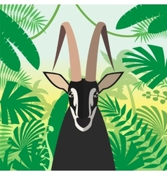 Black Buck on the Jungle Background vector image