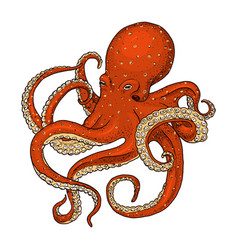 sea creature octopus engraved hand drawn in old vector image